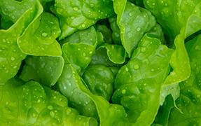 Printelt konyhai üveg hátfal saláta képpel